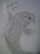 koi fisk