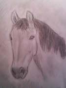 Hästhuvud