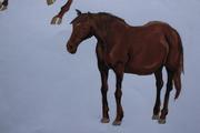 Mörkbrun häst