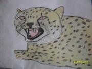 Gepard!!!