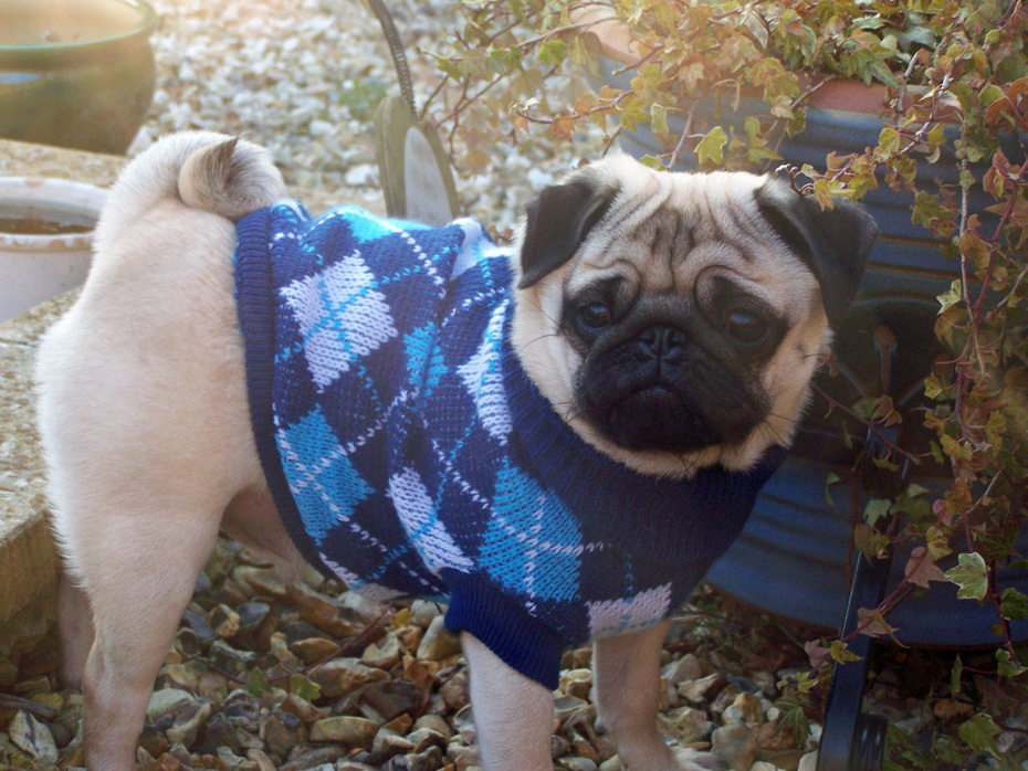 Milo with his new sweater :p