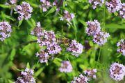 065 Mateřidouška s včelkou