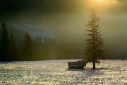 Dom a strom