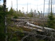 Šumava po lykožrútovi