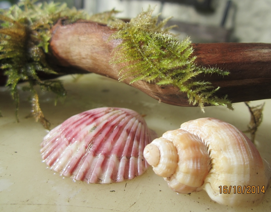 Ferns and sea shells.