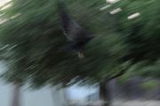 Art In Flight