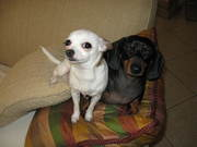 Pix & Carli on Pillow