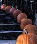 pumpkins SAvannah