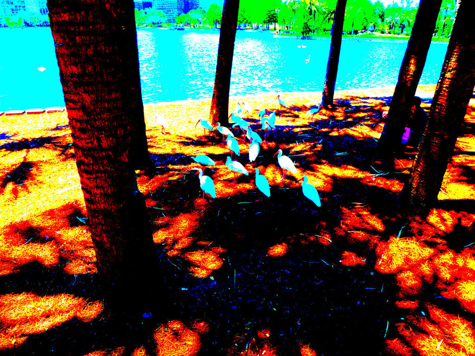 Birds Lake Eola