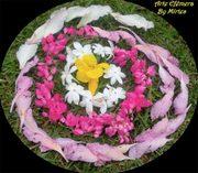 mandala_flores