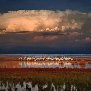 Purity and innocence; flamingos in Cyprus