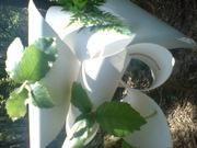 tressage et installation en forêt de Bonifatu