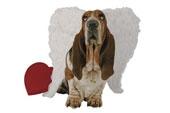 Basset Hound Lovers