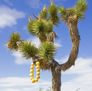 Unique Residency Experience in Joshua Tree National Park