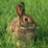 I Love My Rabbit