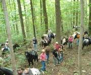 CCWHA trail riders