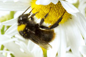 Bee Keeping Group (online)