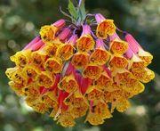 flor exotica amarela