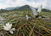 natureza.... em harmonia....