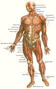 Kropp, pleie, behandling