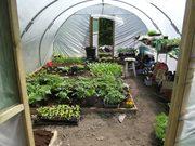 Veggie Growers