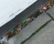PAVEMENT CRACKS AND WINDOW SILLS PHOTOGRAPHIC RETREAT