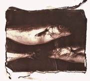 pesci (2)