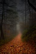 Foggy-Trail