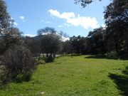 Parque Natural Valle de Alcudia y Sierra Madrona.Flor de Rivera