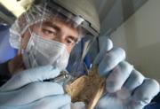 DNA antiguo: aproximaciones y perspectivas en el campo de la bioarqueología.