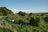 Healing Gardens Cooperat…