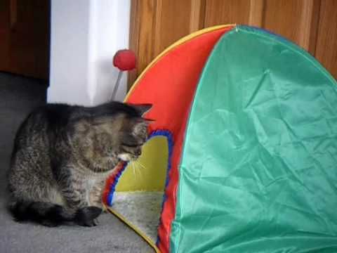 Cats Playing in Kitty Tent brought to you by ThePeaceSeed.com