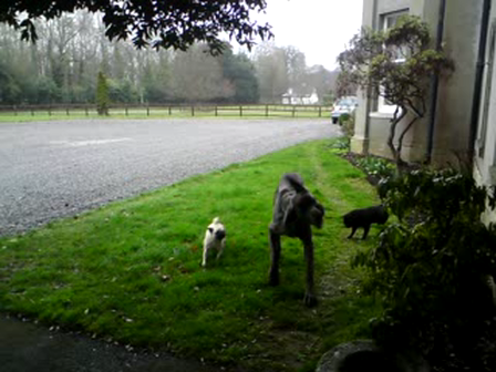 Bentley and token and sam playtime
