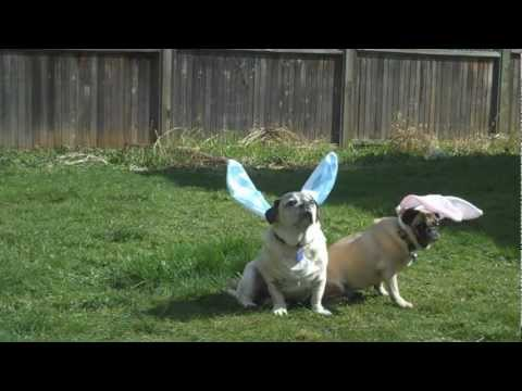 Easter Bunny Q & A