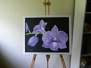 Lt_orchid