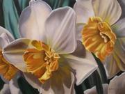 daffodils trio