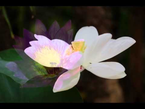Satsang - Meditation with Kip - Talk on Total Surrender