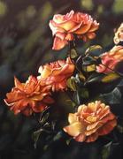 Rainbow Niagara Rose,