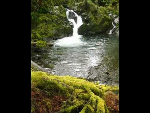 WASHINGTON RAINFOREST with Original Music Soundtrack STURGEON BREACH by Austen Brauker