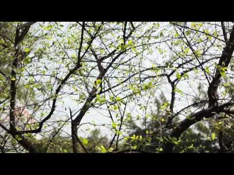 Season Bangkok Promo by Nat Sakhonbut