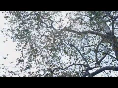 RiFF RaFF SODMG - TiGER WOODS (Official Video)