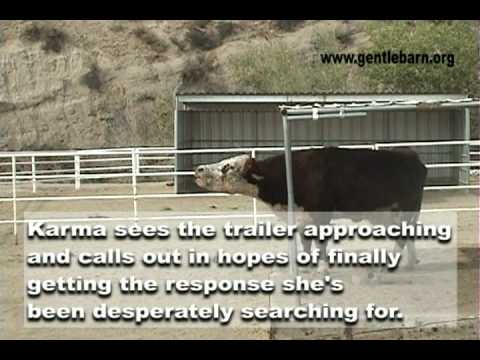 The Gentle Barn: Karma's Reunion