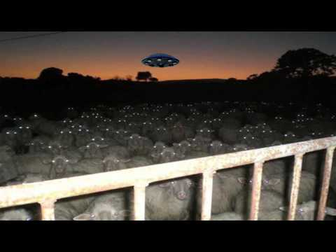 UFO OVER FLOCK OF SHEEP