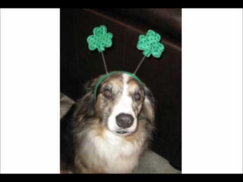 Funny Dog St. Patricks Day Poem