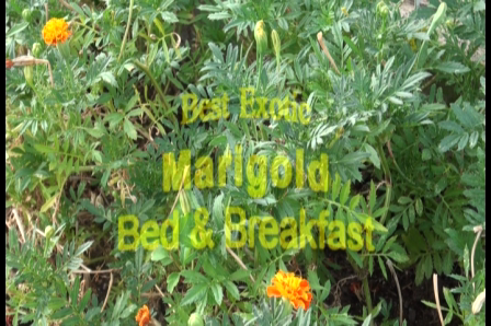 Best Exotic Marigold Bed and Breakfast