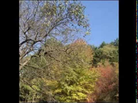 Vasilisia Lazăr Grădinariu - Sfidând Toamna