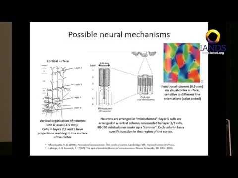 Robert Mays   The mind brain interface