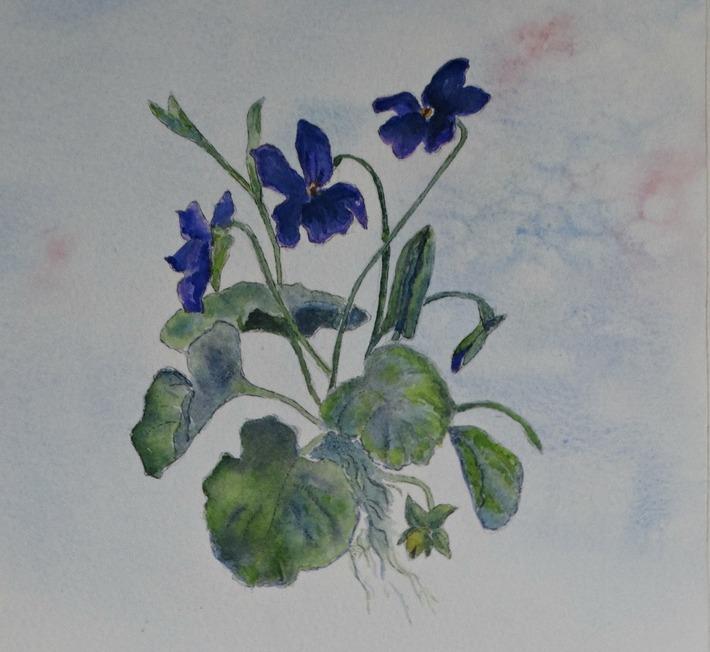 sweet-violettes