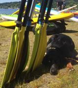 NW Paddle Festival at Lake Sammamish
