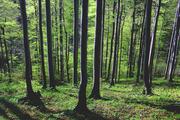 KUTNAR_Slovenia